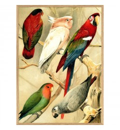 Dybdahl Parrots red 30x40 oak