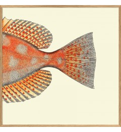 Dybdahl Orange fish tail 30x30 oak