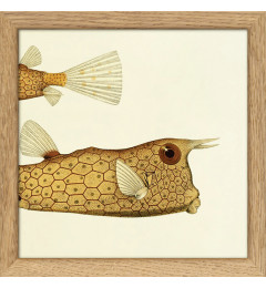 The Dybdahl Half fish 17 x 17 cm. - Oak